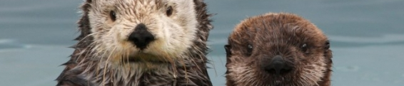 Incoming Otter Updates