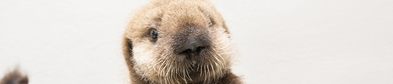 Dev Log: Otter Updates
