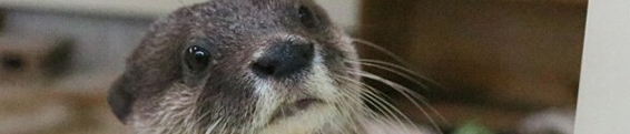Otter Updates: Rich Text